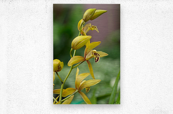 Yellow flowers stem  Metal print