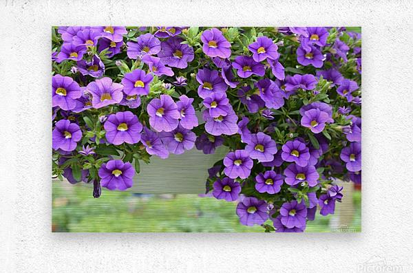 Beautiful Purple Flowers Photograph  Metal print