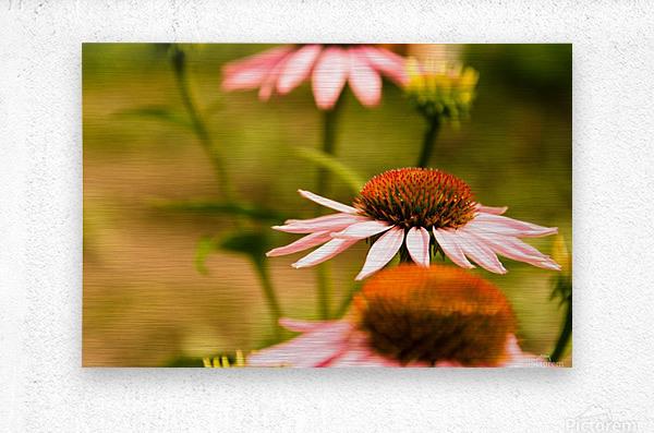 Like Sunflowers  Metal print