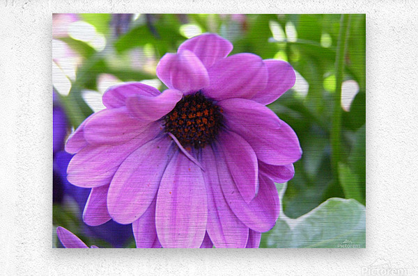 Pink Flower Photography  Metal print