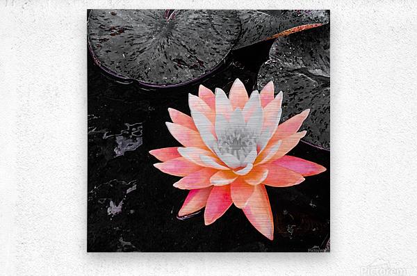 Lotus  Impression metal