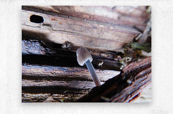 Brave Little Mushroom  Metal print