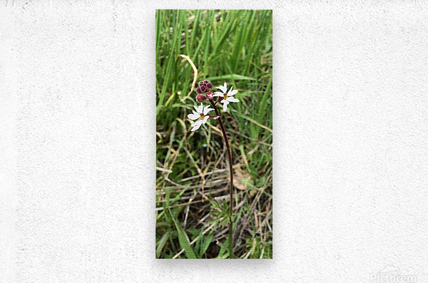 Woodland Star  Metal print
