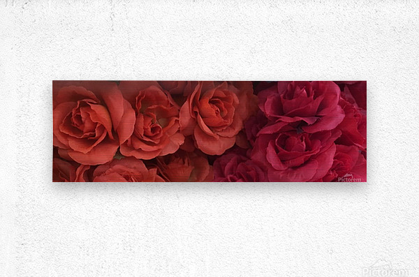 Lovely Red Flowers  Metal print