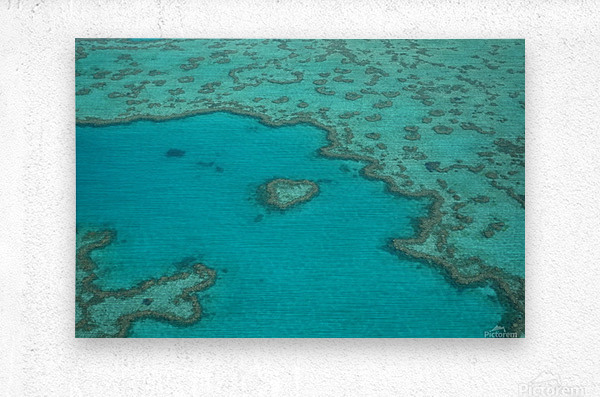 Love Reef  Metal print