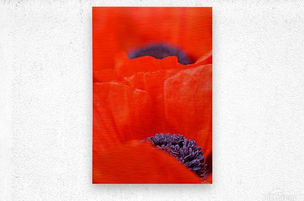 Poppy Heart I  Metal print