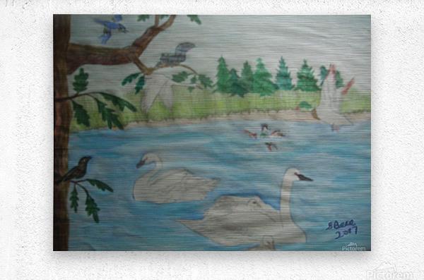 Swan Pond  Metal print