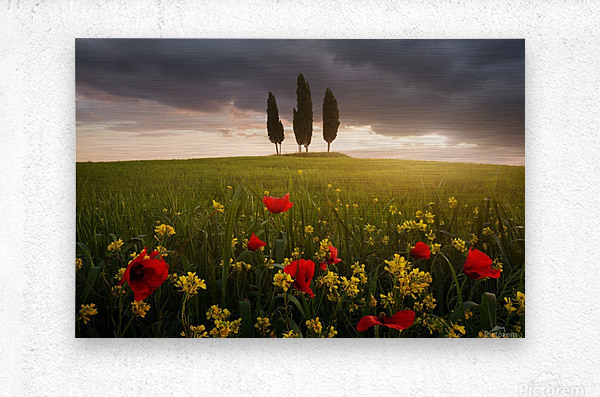 Blooming Tuscany  Metal print