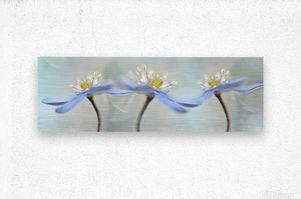 Dancing anemones  Metal print