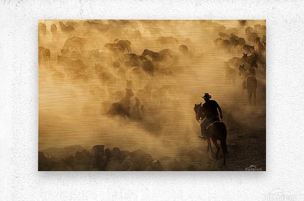 Cappadocia wild horses  Metal print