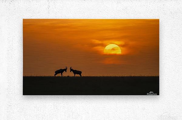 At The Sunset  Metal print