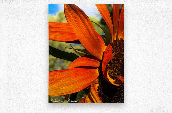 Sunflower   Impression metal