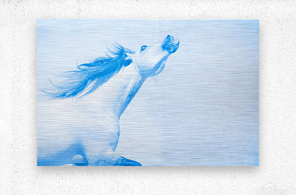 Blue Andalusian Horse 4  Metal print
