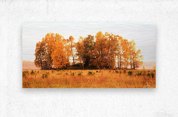 trees of fall  Metal print