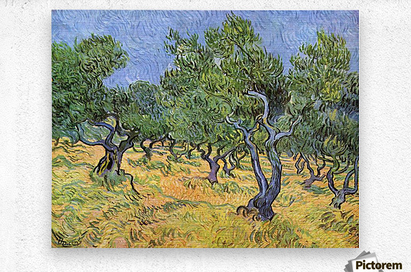Olive Trees by Van Gogh  Metal print