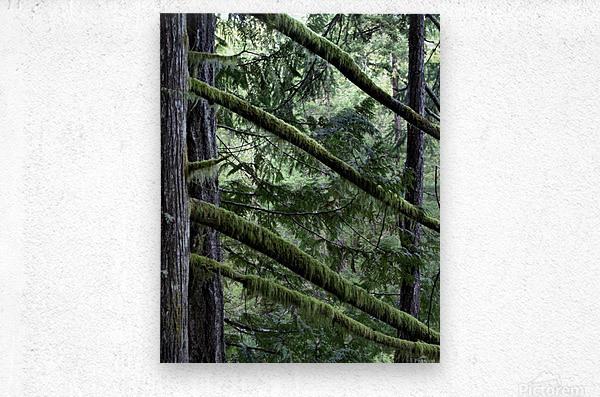 Rainforest  Impression metal