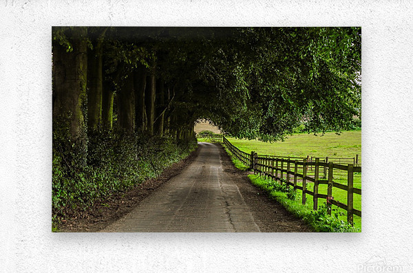 Beautiful Nature Landscape Tree Forest Trees Photography landscape photo Scenery  Metal print