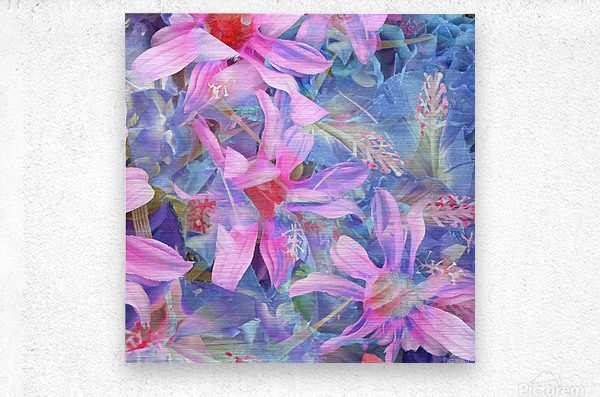 blooming pink and blue daisy flower abstract background  Metal print