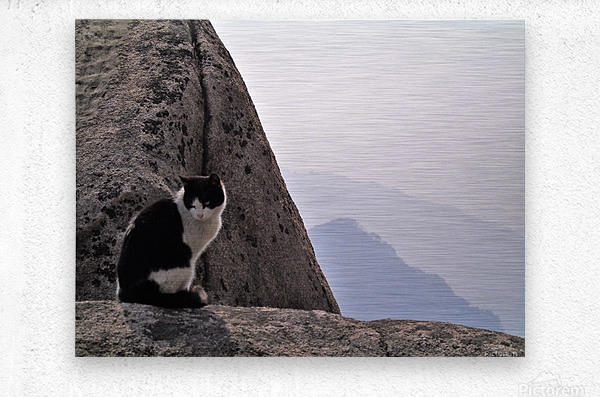 Mountain Cat  Metal print