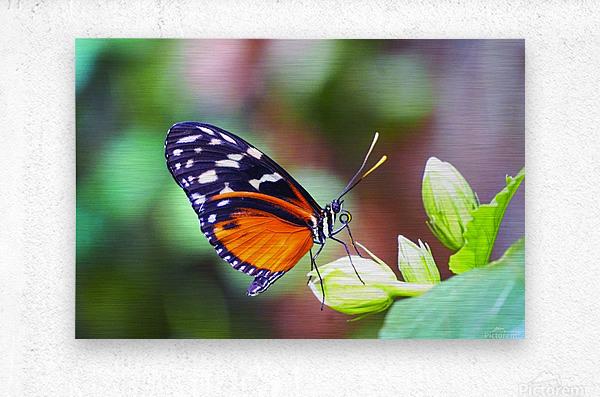 Monarch on a Bud  Metal print