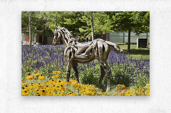 Odyssey the horse and Hope the Colt sculptures made of driftwood by Heather Jansch. 2  Metal print