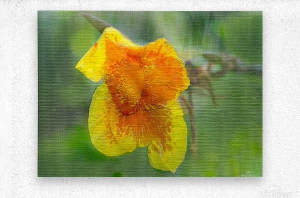 Canna Lily Digital Painting 52 70 200px  Metal print