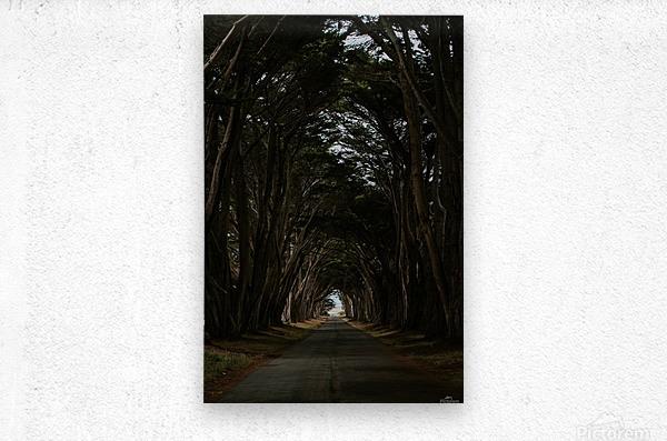 Cypress Tree Tunnel California  Impression metal
