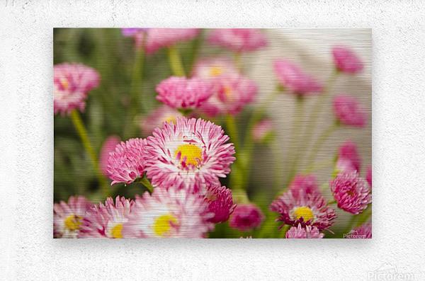 Blooms in the Garden  Metal print