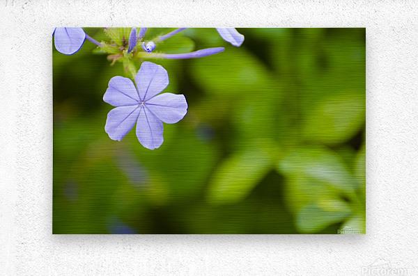 Flora  Metal print