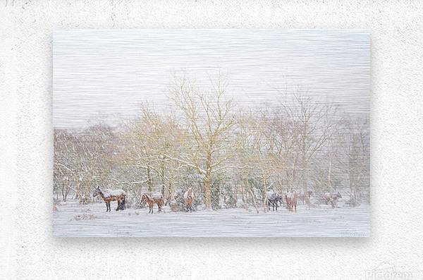 SNOW HORSES 3.  Metal print