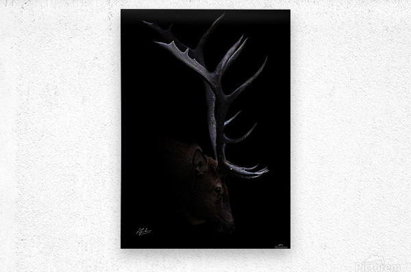 Elk in Black  Metal print