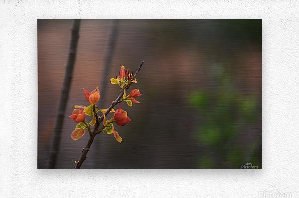 orange blossoms  Metal print