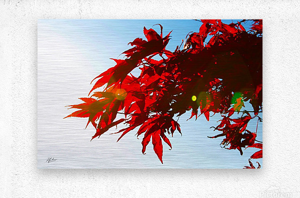 Chinese Maple  Metal print