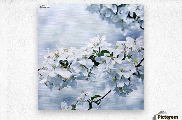 Cherry tree flowers  Metal print