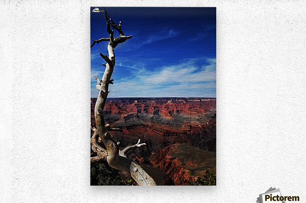 Grand Canyon framed by tree  Metal print