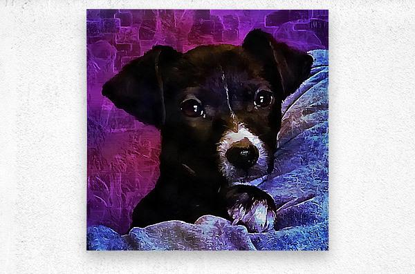 Soft Puppy Snuggles  Metal print