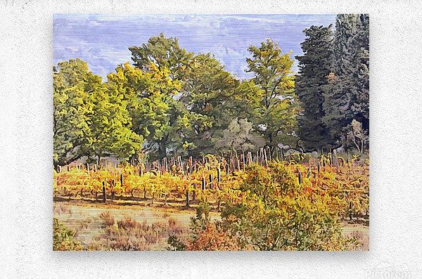 Tuscan Countryside in Autumn  Metal print