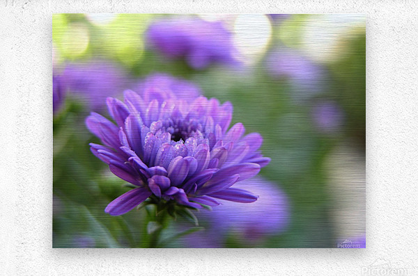 Blue Flower Photograph  Metal print