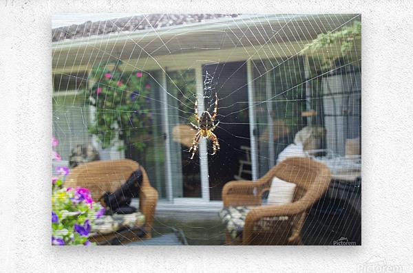 Spider  Metal print