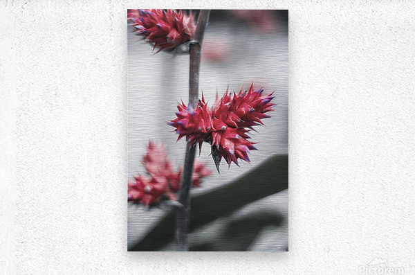 spiked flower  Metal print