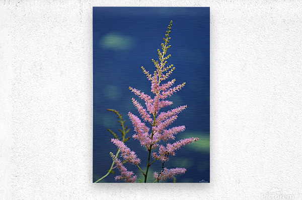 Pink Floral Dow Gardens 2 062718  Metal print
