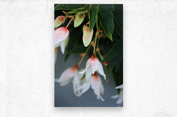 Soft Floral with Gray Wall 2 062618  Metal print