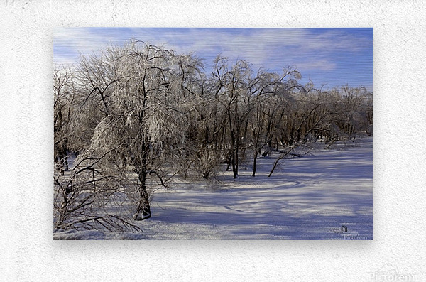 Matin glace- Iced morning  Metal print