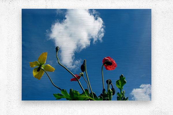 Happy Spring Flowers  Metal print