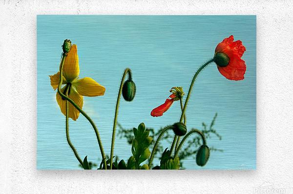 Spring Sky Flowers  Metal print