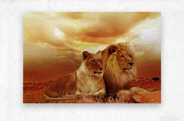 lion safari africa landscape  Metal print