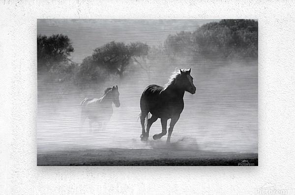 horse herd dust nature wild  Metal print