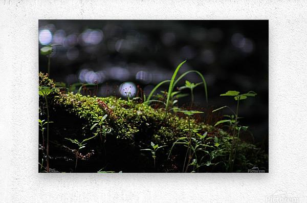 Beautiful Moss  Metal print