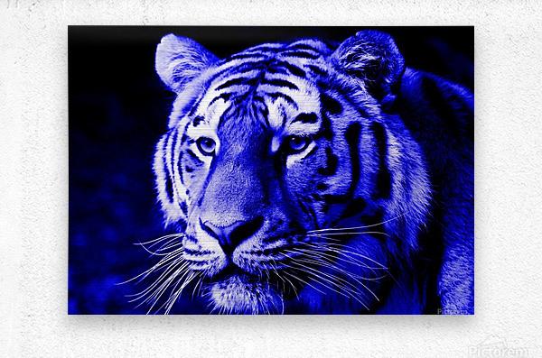 Tiger pop blue  Metal print
