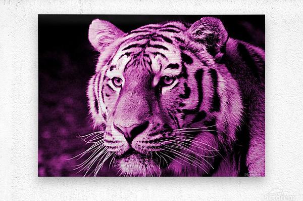 Tiger pop pink  Metal print